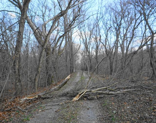 Fallen tree.