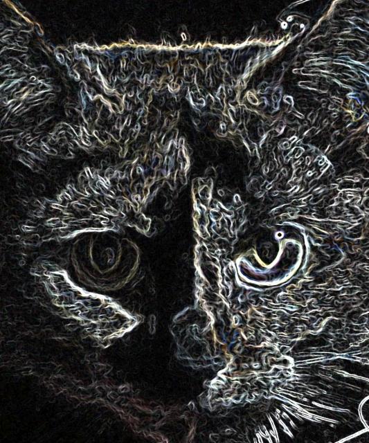 Wierd cat photo