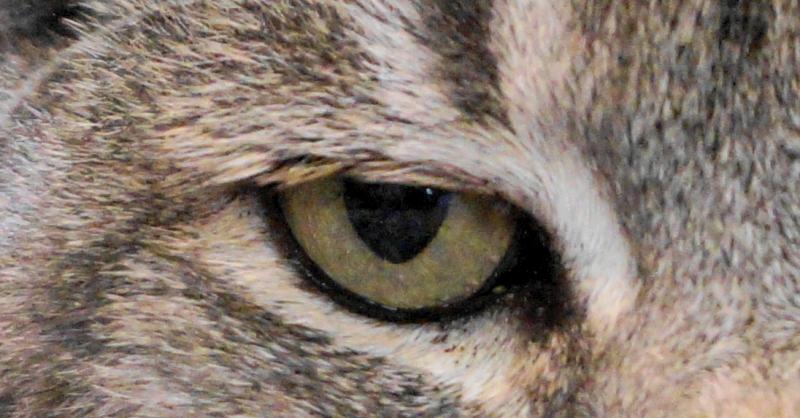 Cats eye close up.