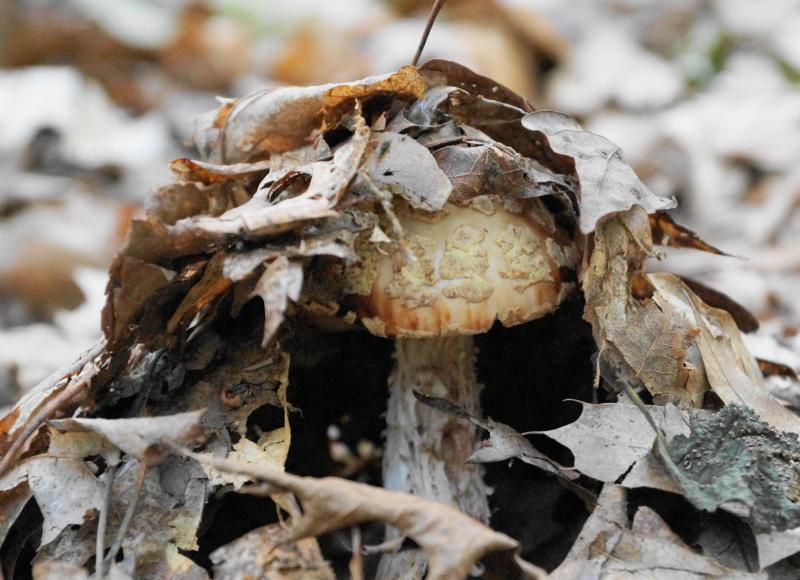 Mushroom emergence.
